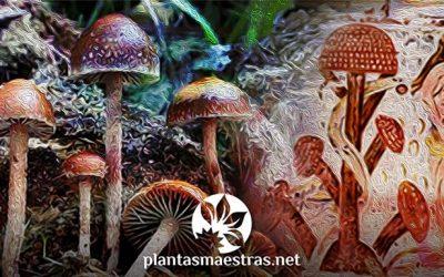 Plantas sagradas: Volver al origen