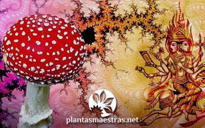 Soma, el dios-planta indoario. Buscando la identidad del néctar sagrado