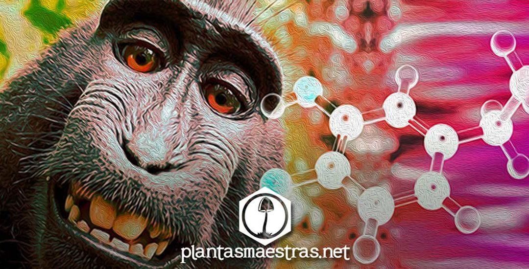 Adictos a la dopamina | Descubre cómo te afecta y que puedes hacer