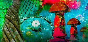 plantas sagradas como la ayahuasca, peyote y hongos sagrados