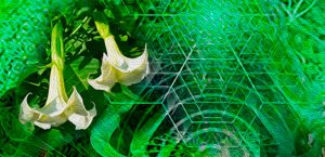 Las Plantas Sagradas | Plantas Maestras o plantas de poder