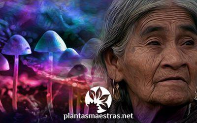 En busca de los hongos sagrados