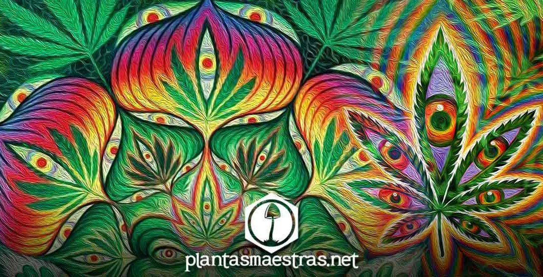 Marihuana la hierba santa, es una planta sagrada: el bhang
