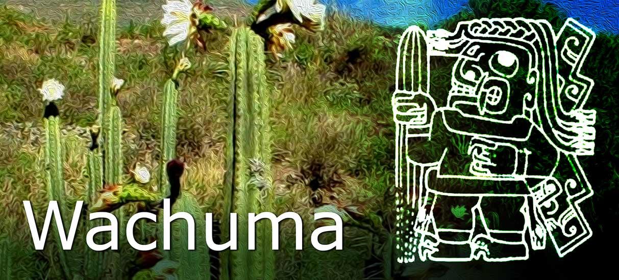 wachuma o san Pedro